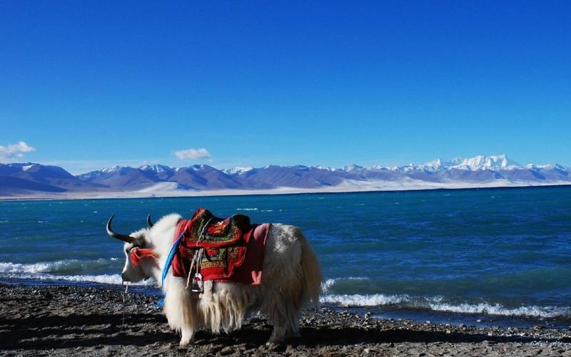 Lhasa Namtso Lake Classic Tour